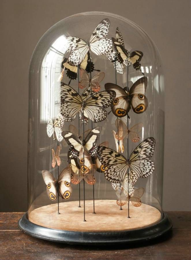 glass-bell-butterflies
